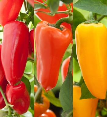 Snack Paprika mix