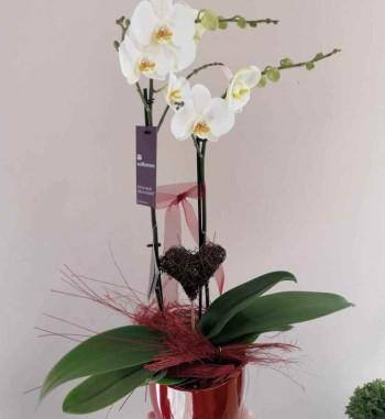 Orchidee geschmückt